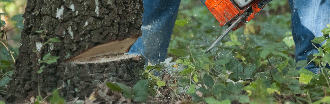 Tree removal is a dangerous job that should be left to the experts.