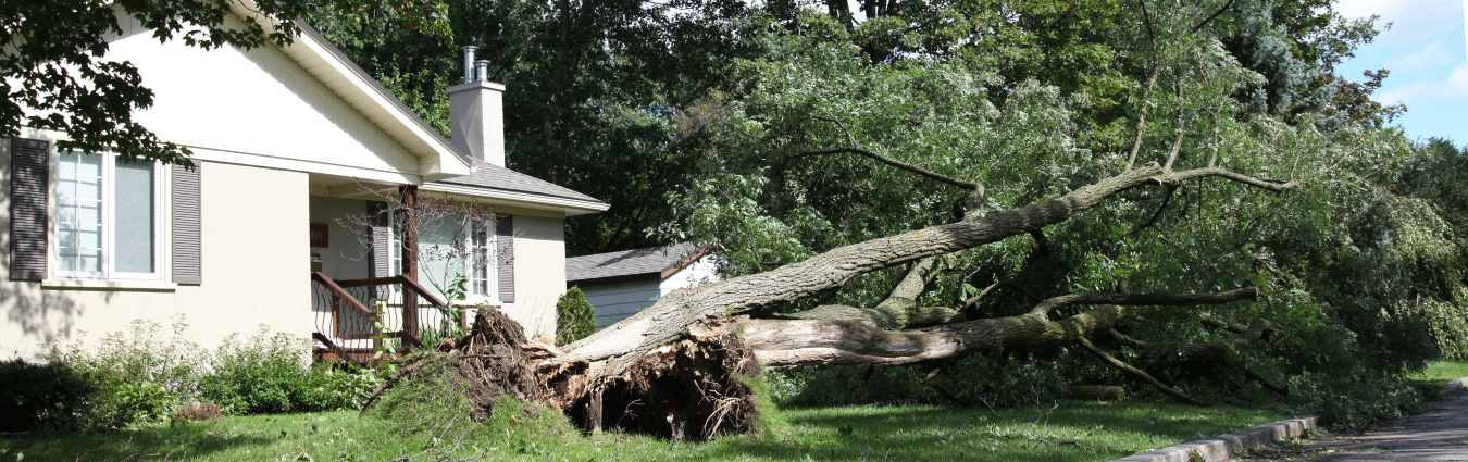 Storm damage insurance claims are our specialty!
